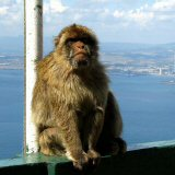Daytrip excursions to Gibraltar from Torremolinos, Barbary Macaques on Gibraltar's Rock